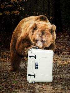 Yeti Bear Proof