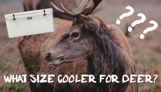 what-size-cooler-for-deer