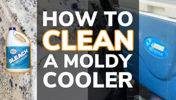 How to Clean a Moldy Cooler
